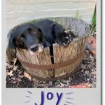 August Break – Day 7: Joy